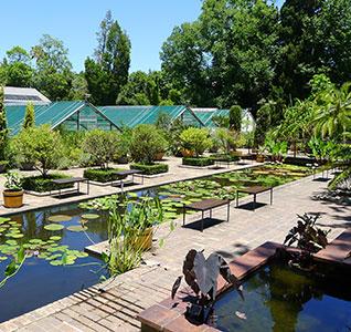 su-botanical-gardens